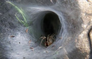 spider-in-tunnel-web_26690_600x450